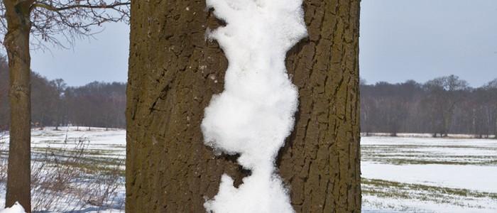 Uwe Döbbeke – Schnee an den Bäumen